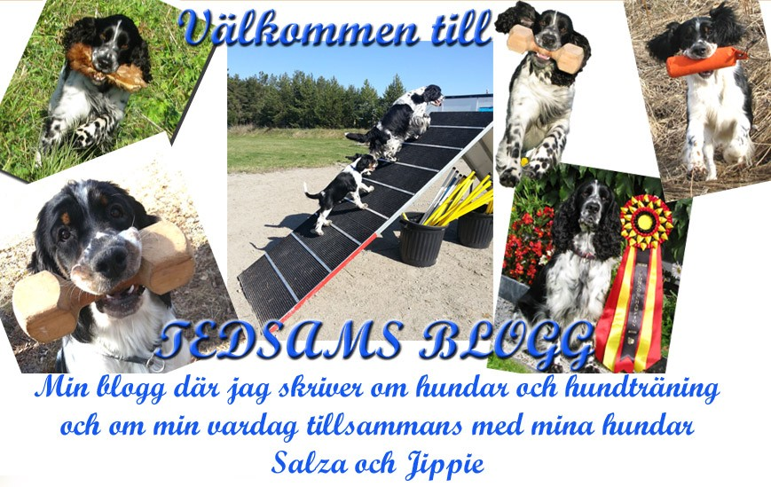 Tedsams blogg
